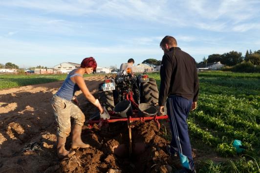 Parcelle agricole à Six-Fours