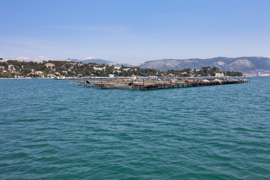 Aquaculture baie de Tamaris