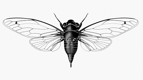 Cicada © Active Creative Design