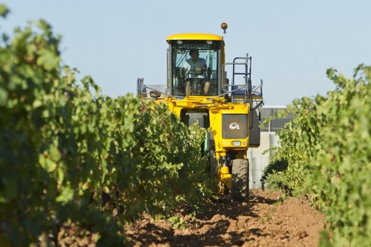 vendanges à la machine, La Crau