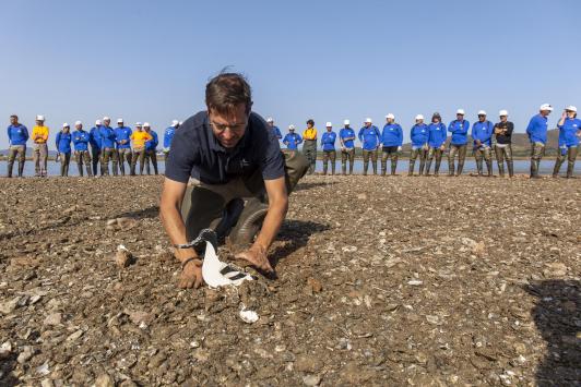 travaux îlot de nidification, installation des leurres, le 24 septembre 2021