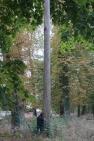Le frêne qui a servi de modèle à la sculpture